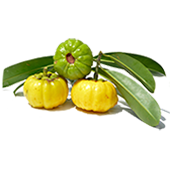 Image of Gacinia Cambogia Fruit